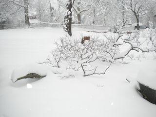 Blizzard Feb 2010 048